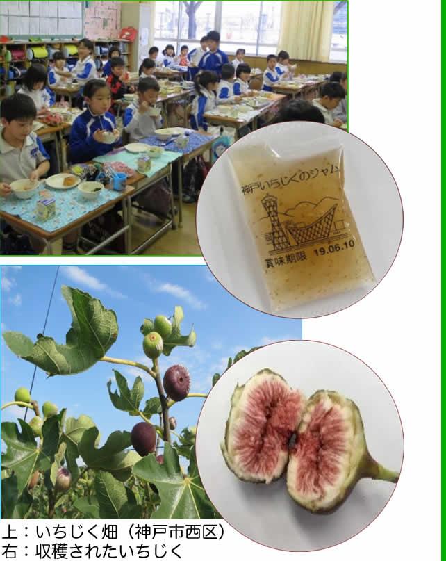 神戸市学校給食で提供されたいちじくジャムの紹介写真